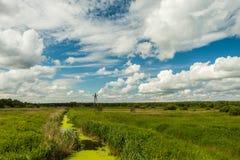Een kleine stroom die het groene struikgewas van gras doornemen Stock Afbeeldingen