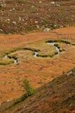 Een kleine stroom stroomt in de weide, in herfstatmosfeer Royalty-vrije Stock Foto's