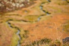 Een kleine stroom stroomt in de weide, in herfstatmosfeer Stock Foto's