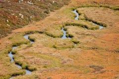 Een kleine stroom stroomt in de weide, in herfstatmosfeer Stock Foto