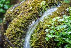 Een kleine stroom vloeit door dik mos stock foto's