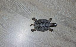 Een kleine stuk speelgoed schildpad stock afbeeldingen