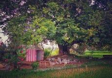 Een kleine tempel onder een boom stock fotografie