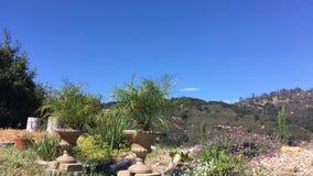 Een kleine tuin in de bergen van Californië de installaties kronkelen zich in de wind stock video