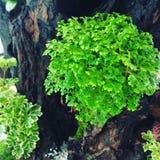 Een kleine tuin van installaties Royalty-vrije Stock Foto's