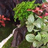 Een kleine tuin van installaties Royalty-vrije Stock Afbeeldingen