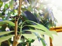 Een kleine vlinder Stock Foto
