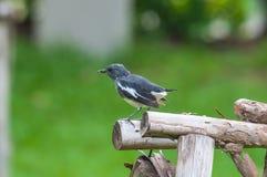 Een kleine Vogel Stock Foto