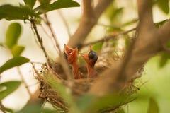 Een kleine Vogel Royalty-vrije Stock Foto