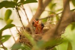 Een kleine Vogel Stock Afbeeldingen