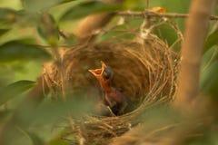Een kleine Vogel Royalty-vrije Stock Afbeeldingen
