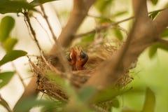 Een kleine Vogel Royalty-vrije Stock Afbeelding