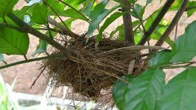 Een kleine vogel bouwde zijn nest op een klein fruitboom die ik heb geplant royalty-vrije stock afbeeldingen