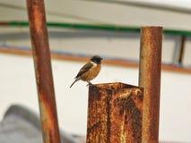 Een kleine vogel op een staak Stock Foto's