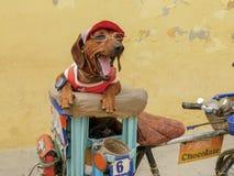 Een kleine vriend in Havana stock afbeelding