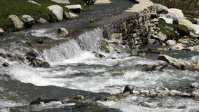 Een kleine waterval en stenen stock footage