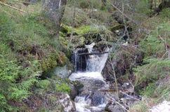 Een kleine waterval in het bos stock foto