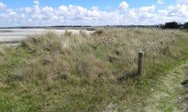 Een kleine weg bij de kust met gras Stock Foto
