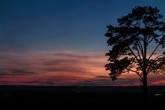 Een kleurrijke fee magische roze-blauwe zonsondergang door het platteland en een prachtige naaldboomboom Stock Foto's