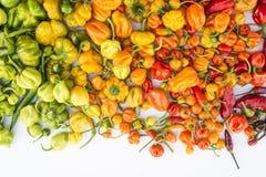 Een kleurrijke mengeling van de heetste Spaanse peperpeper Royalty-vrije Stock Foto's