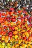 Een kleurrijke mengeling van de heetste Spaanse peperpeper Royalty-vrije Stock Fotografie