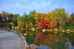 Een kleurrijke oever van het meer royalty-vrije stock foto