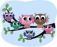 Een kleurrijke uilfamilie Royalty-vrije Stock Foto