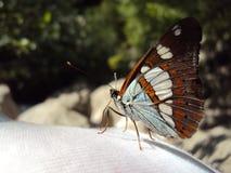 Een kleurrijke vlinder royalty-vrije stock foto