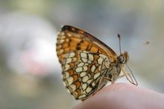 Een kleurrijke vlinder stock foto