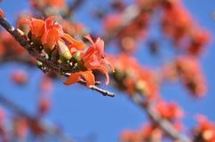 Een knop van mooie oranje bloembloemblaadjes Royalty-vrije Stock Fotografie