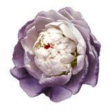 Een knop van wit-purpere tot bloei komende pioenbloem Geïsoleerde bloem op een witte achtergrond met het knippen van weg zonder s royalty-vrije stock afbeeldingen