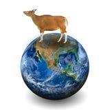 Een koe op de aarde Elementen van dit die beeld door NASA wordt geleverd Royalty-vrije Stock Afbeeldingen