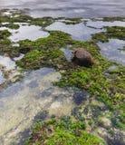 Een kokosnoot op de groene bemoste aard stock afbeeldingen