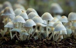 Een kolonie van paddestoelen Royalty-vrije Stock Foto