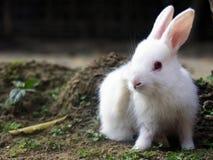 Een konijn royalty-vrije stock afbeelding