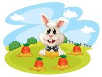 Een konijn bij het landbouwbedrijf met wortelen Royalty-vrije Stock Foto