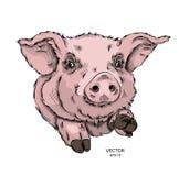 Een konijn in een cowboyhoed vector illustrationPortrait van een varken in de gekleurde glazen Denk verschillend Vector illustrat Stock Fotografie