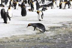 Een koning Penguin probeert om aan wal van de sneeuwbrij op de Vlakte van Salisbury op Zuid-Georgië te worden royalty-vrije stock afbeeldingen