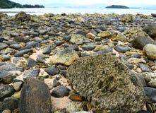 Een koraal Stock Afbeeldingen