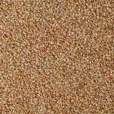 Een korrel van tarwe stock fotografie