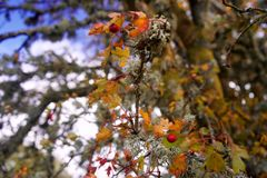 Een korstmos op een boomdetail royalty-vrije stock foto's