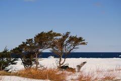 Een koude winderige dag Royalty-vrije Stock Afbeeldingen