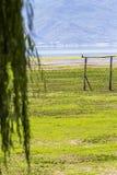 Een kraai streek op een houten pool in September-het moerasland van Meerkerkini neer Stock Foto's