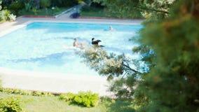 Een kraai zit op de achtergrond van de pool op de sparren stock videobeelden