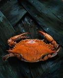 Een krab stock afbeelding