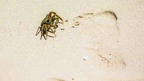 Een krab naast een menselijke voetafdruk stock foto