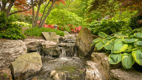 Een kreek met een kleine waterval, groenranden stock fotografie