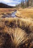 Een kreek wandelt door een vallei Stock Foto
