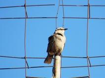 Een kroes- vogel op tijd Stock Fotografie