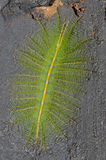 Een kruipend groot groen insect met doornen Stock Afbeelding